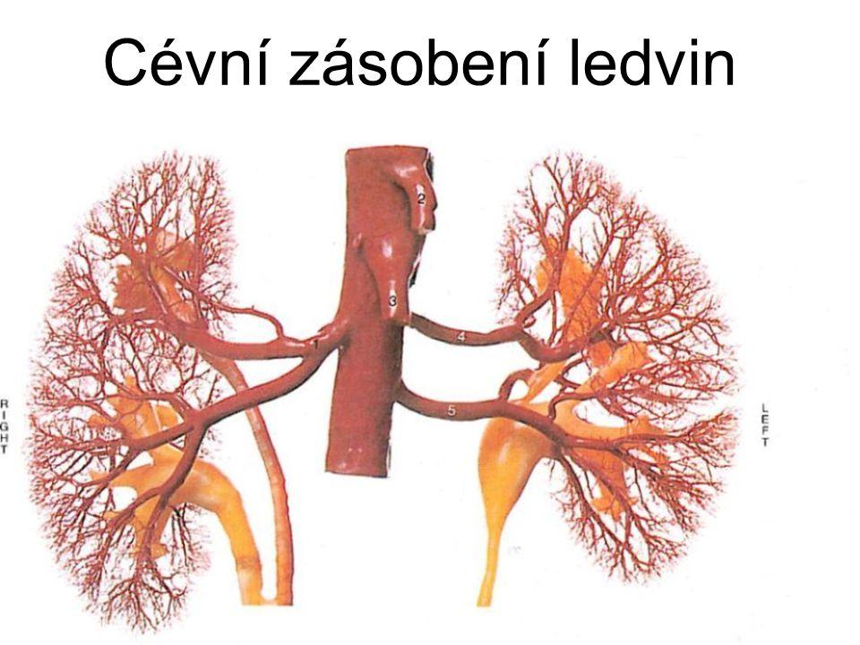 Cévní zásobení ledvin