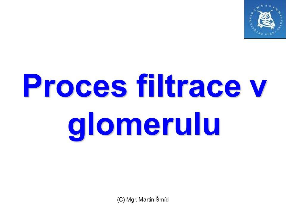 Proces filtrace v glomerulu