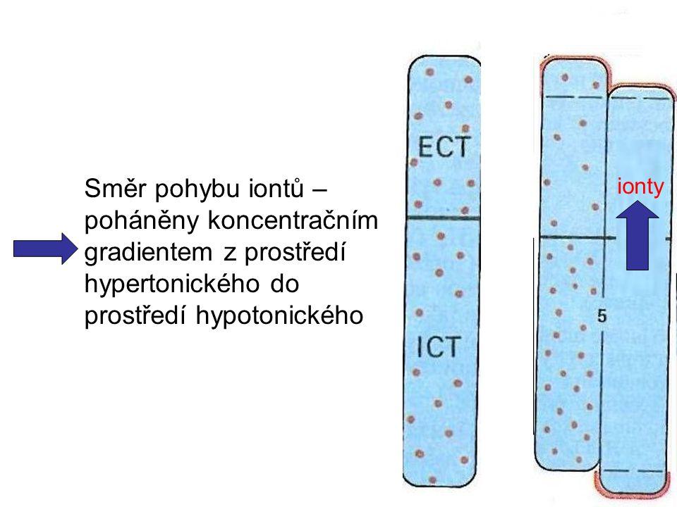 Směr pohybu iontů – poháněny koncentračním gradientem z prostředí hypertonického do prostředí hypotonického