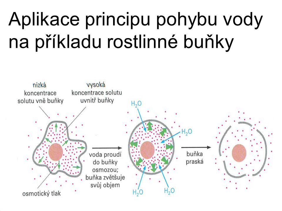 Aplikace principu pohybu vody na příkladu rostlinné buňky
