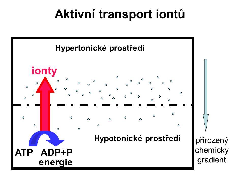 Aktivní transport iontů Hypertonické prostředí Hypotonické prostředí