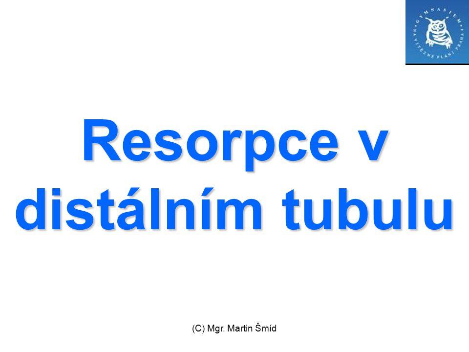 Resorpce v distálním tubulu
