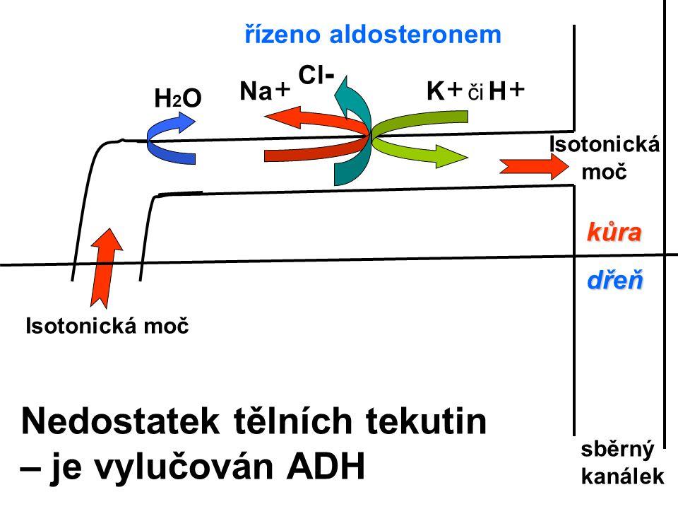 Nedostatek tělních tekutin – je vylučován ADH