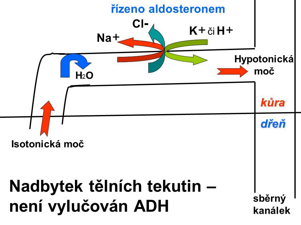 Nadbytek tělních tekutin – není vylučován ADH