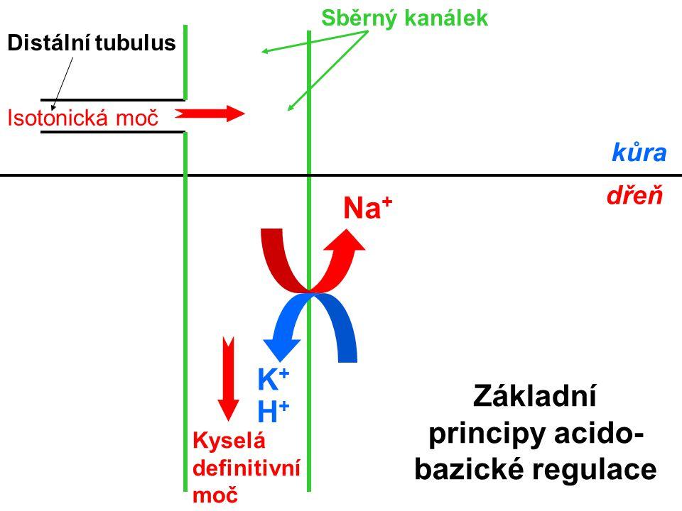 Základní principy acido-bazické regulace