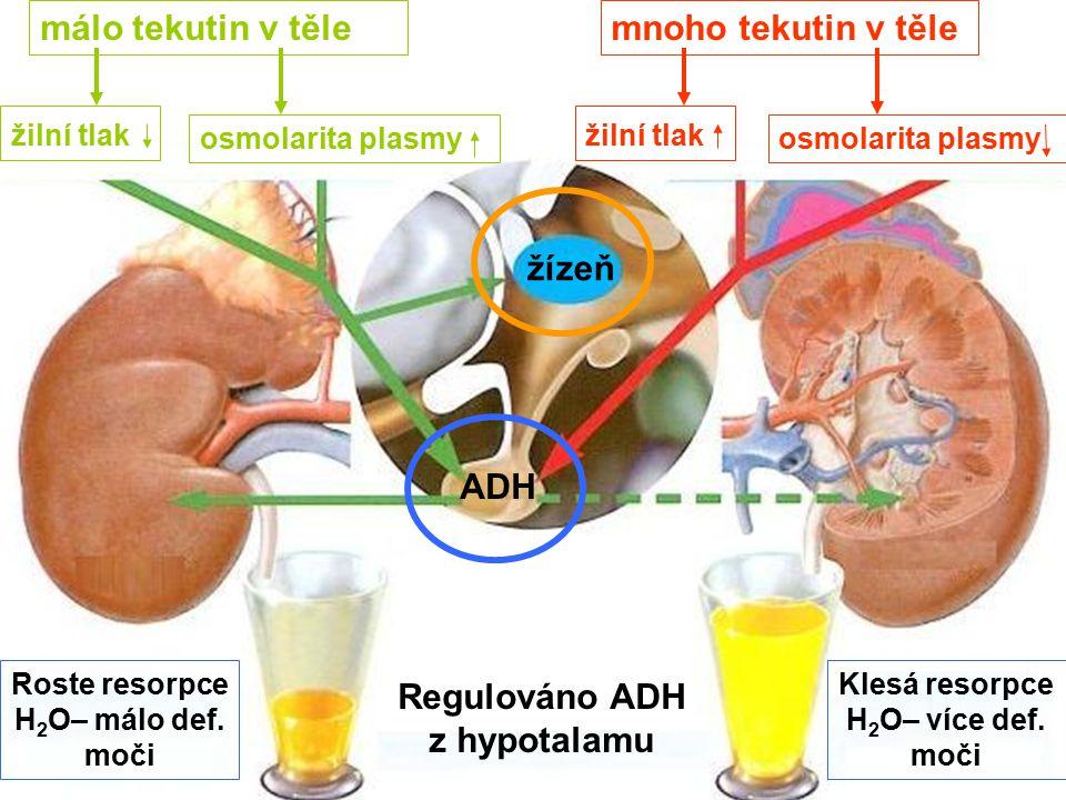 Regulováno ADH z hypotalamu
