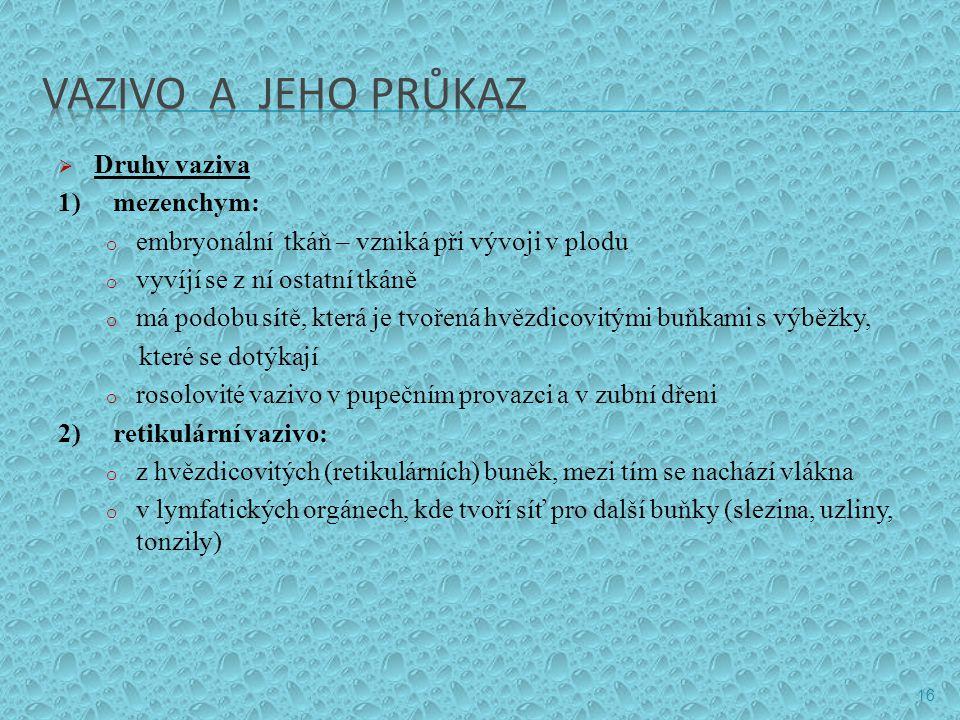VAZIVO A JEHO PRŮKAZ Druhy vaziva 1) mezenchym: