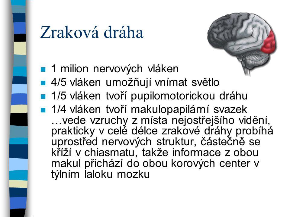 Zraková dráha 1 milion nervových vláken