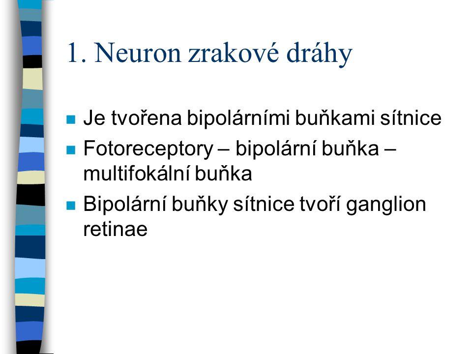 1. Neuron zrakové dráhy Je tvořena bipolárními buňkami sítnice