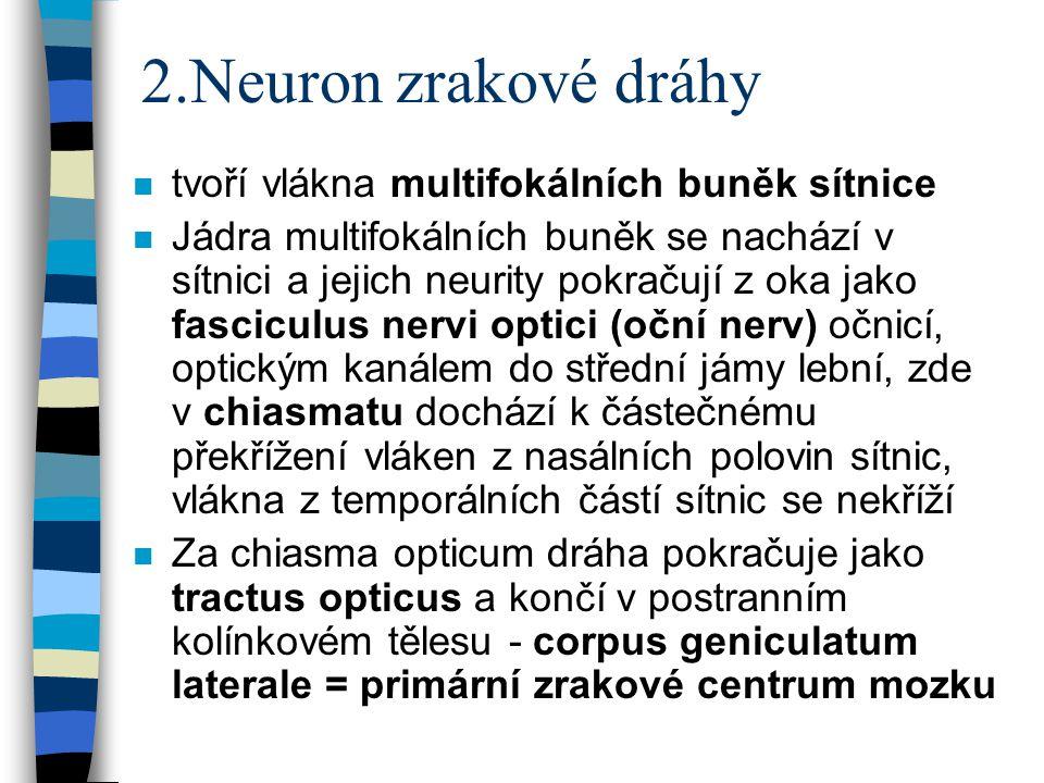 2.Neuron zrakové dráhy tvoří vlákna multifokálních buněk sítnice