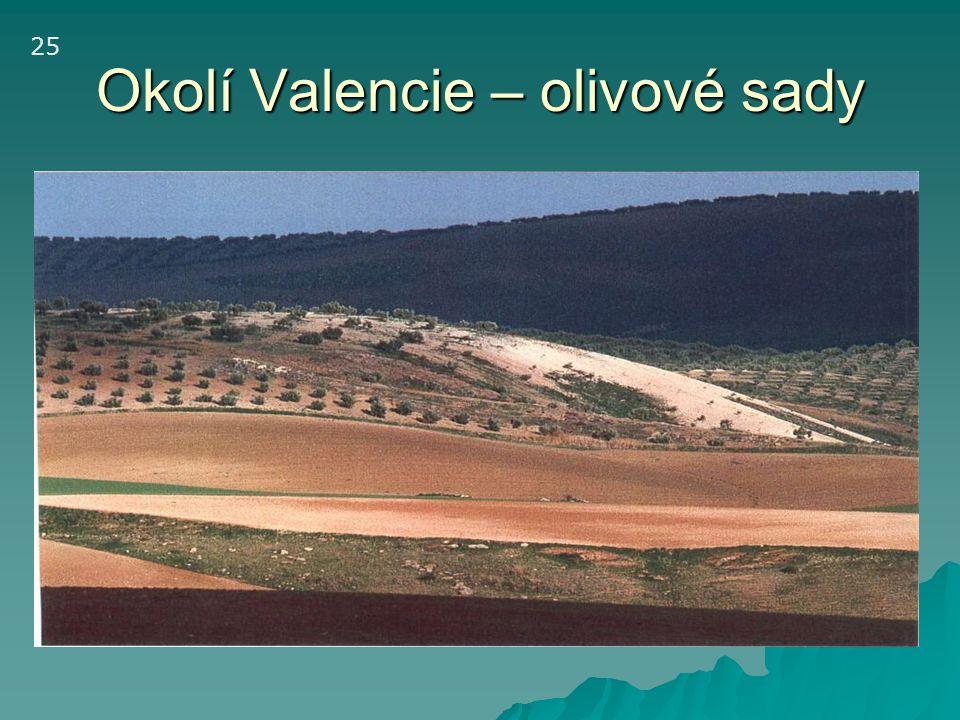 Okolí Valencie – olivové sady