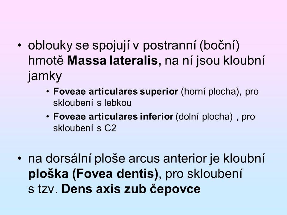 oblouky se spojují v postranní (boční) hmotě Massa lateralis, na ní jsou kloubní jamky