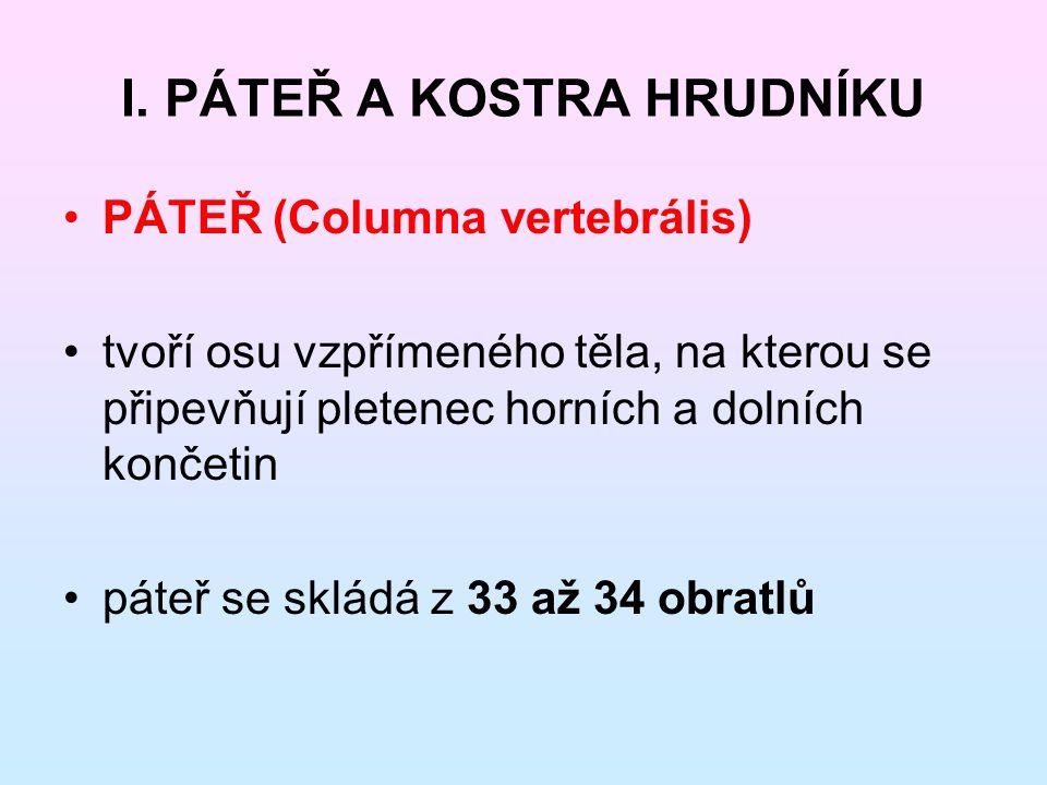 I. PÁTEŘ A KOSTRA HRUDNÍKU