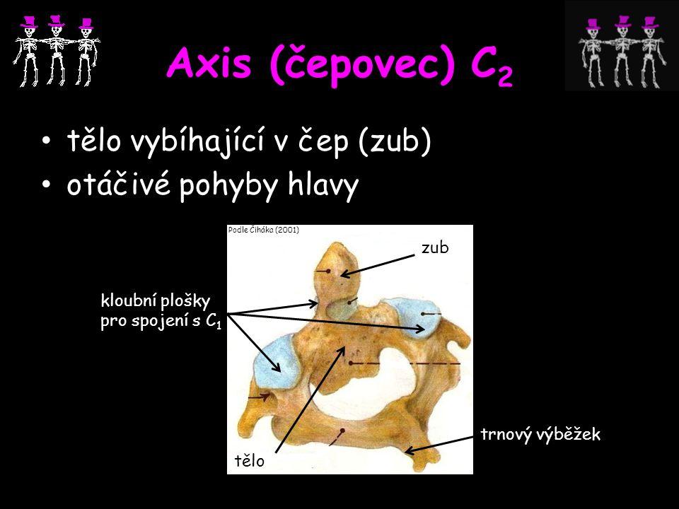 Axis (čepovec) C2 tělo vybíhající v čep (zub) otáčivé pohyby hlavy zub