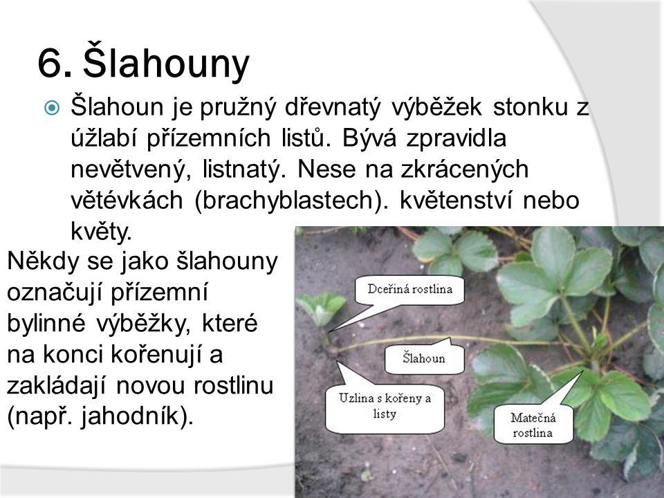 6. Šlahouny