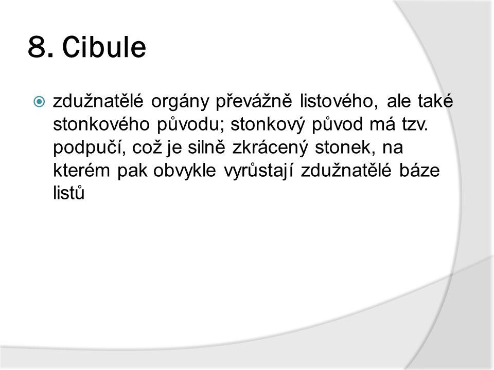 8. Cibule