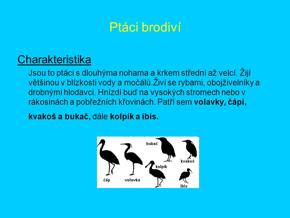 Ptáci brodiví Charakteristika
