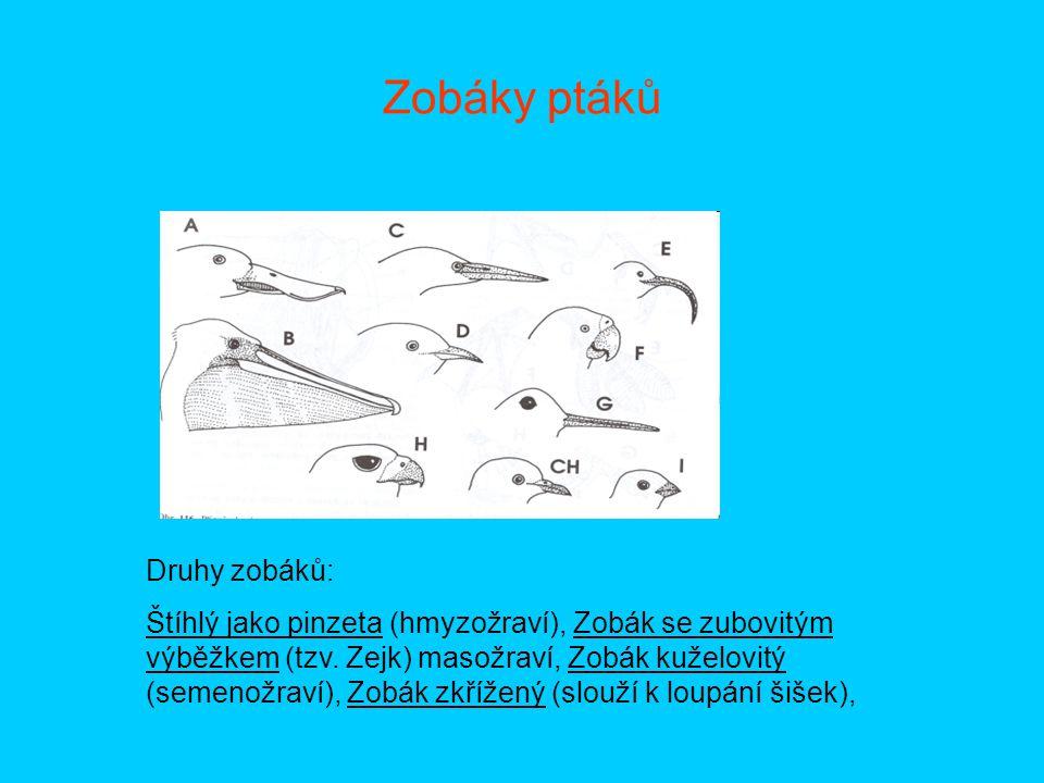 Zobáky ptáků Druhy zobáků:
