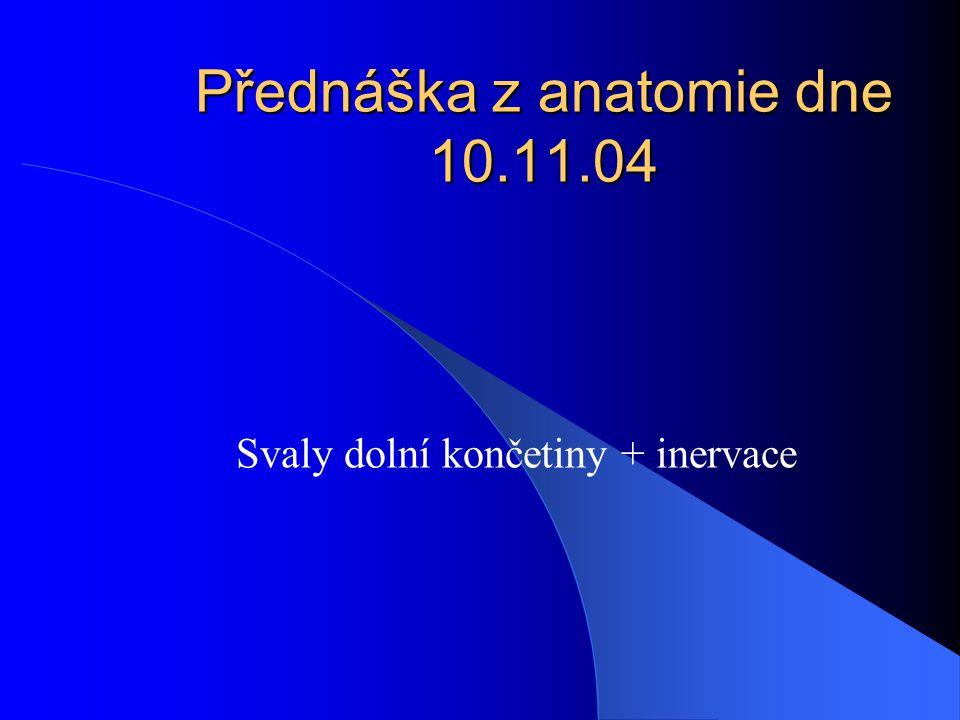 Přednáška z anatomie dne 10.11.04