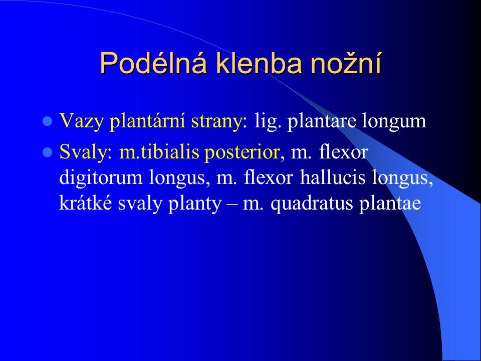 Podélná klenba nožní Vazy plantární strany: lig. plantare longum