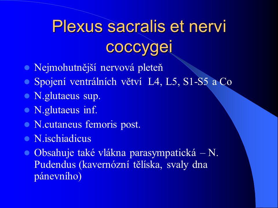 Plexus sacralis et nervi coccygei