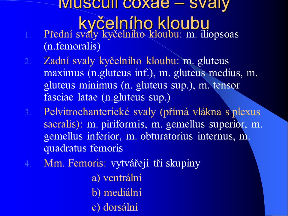 Musculi coxae – svaly kyčelního kloubu