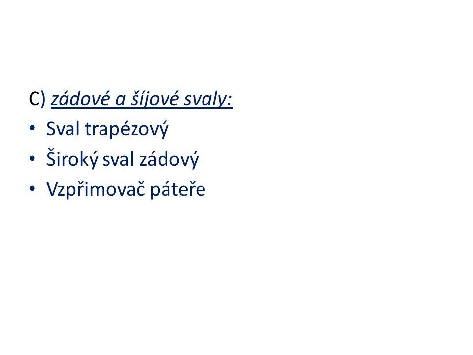 C) zádové a šíjové svaly: