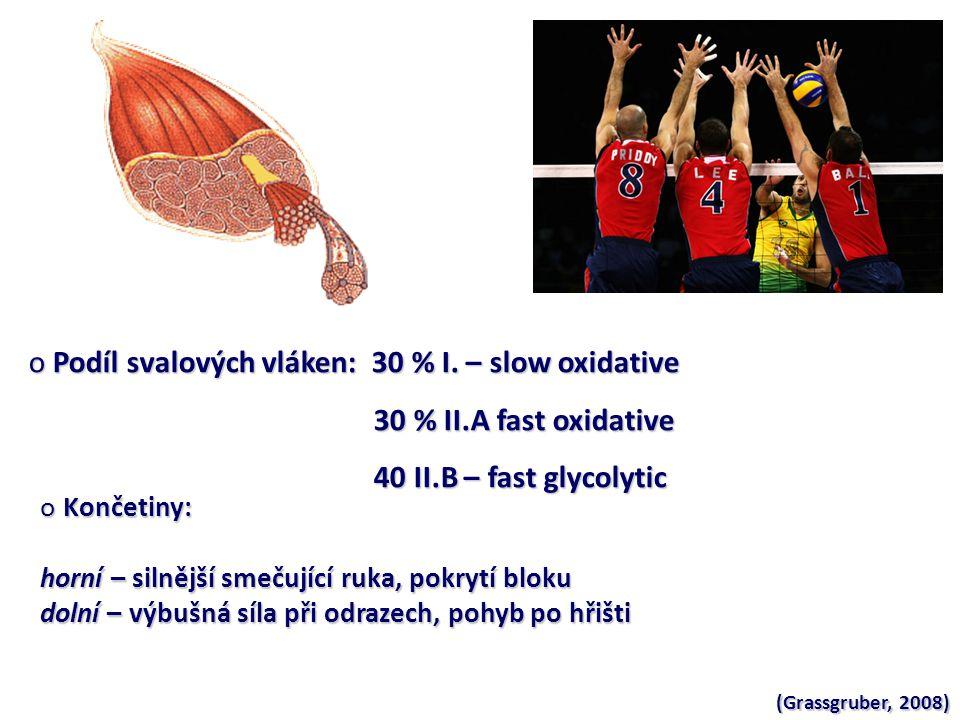 Podíl svalových vláken: 30 % I. – slow oxidative