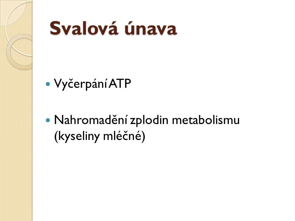 Svalová únava Vyčerpání ATP