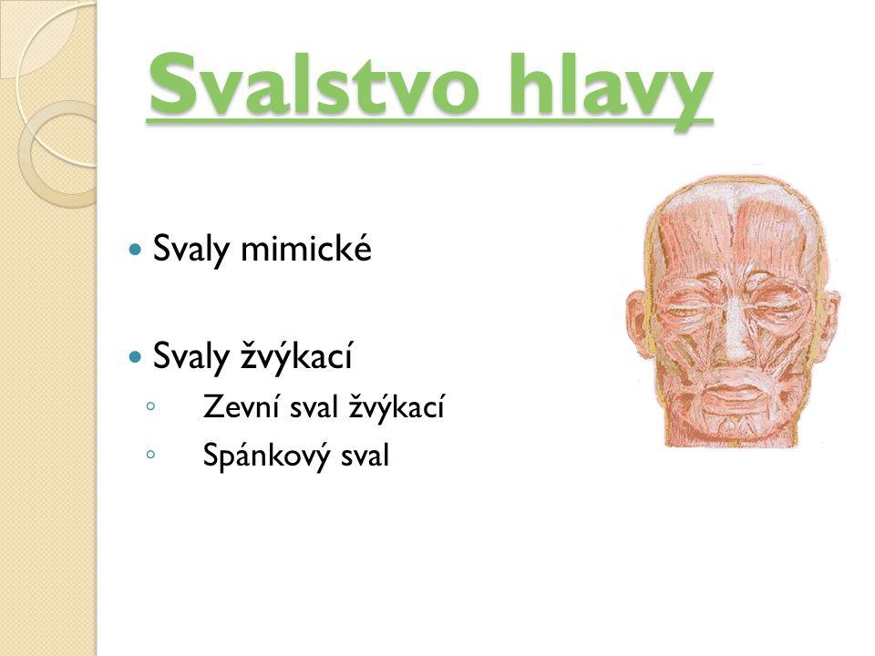 Svalstvo hlavy Svaly mimické Svaly žvýkací Zevní sval žvýkací
