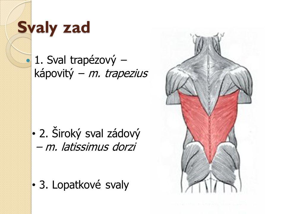 Svaly zad 1. Sval trapézový – kápovitý – m. trapezius