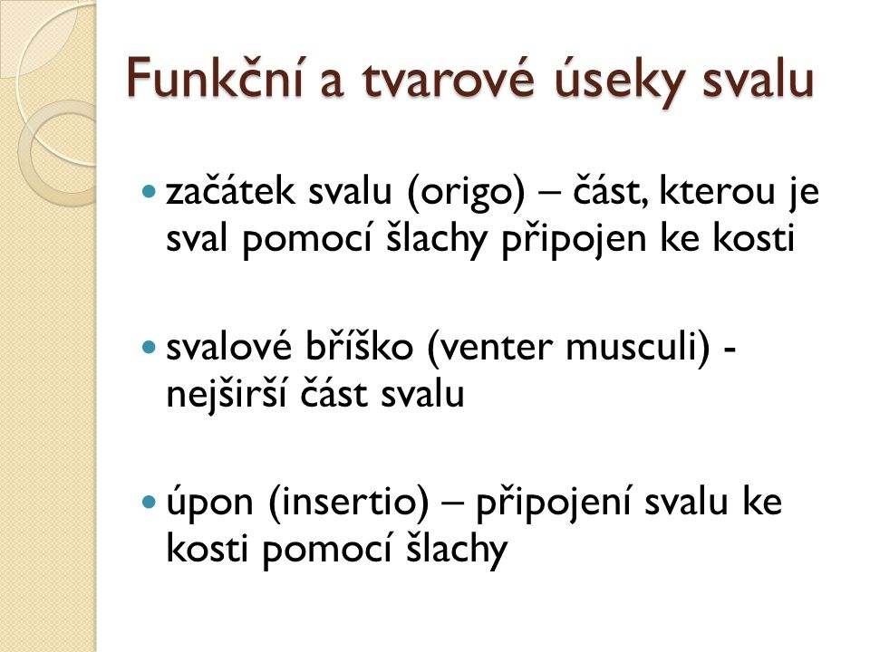 Funkční a tvarové úseky svalu