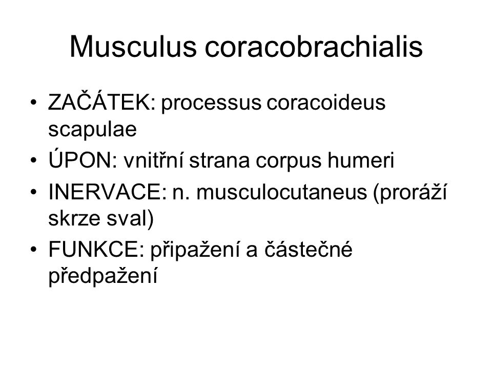 Musculus coracobrachialis