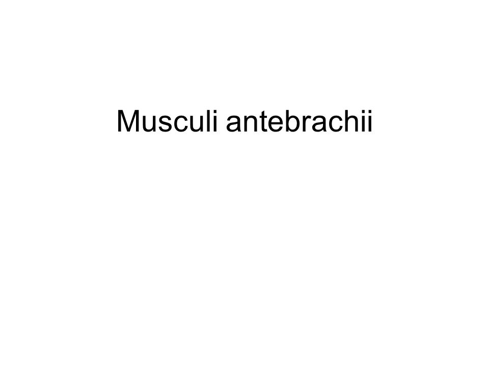 Musculi antebrachii