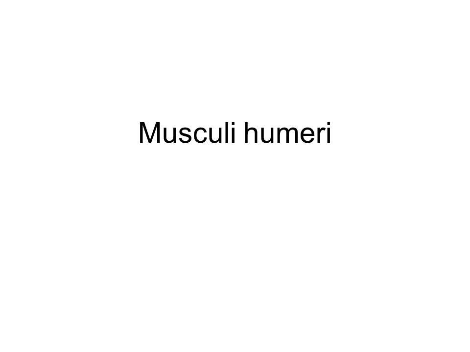 Musculi humeri