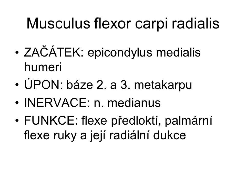 Musculus flexor carpi radialis