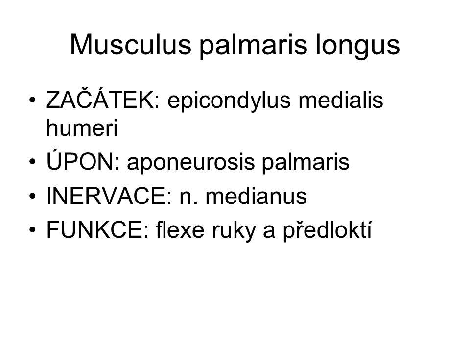 Musculus palmaris longus
