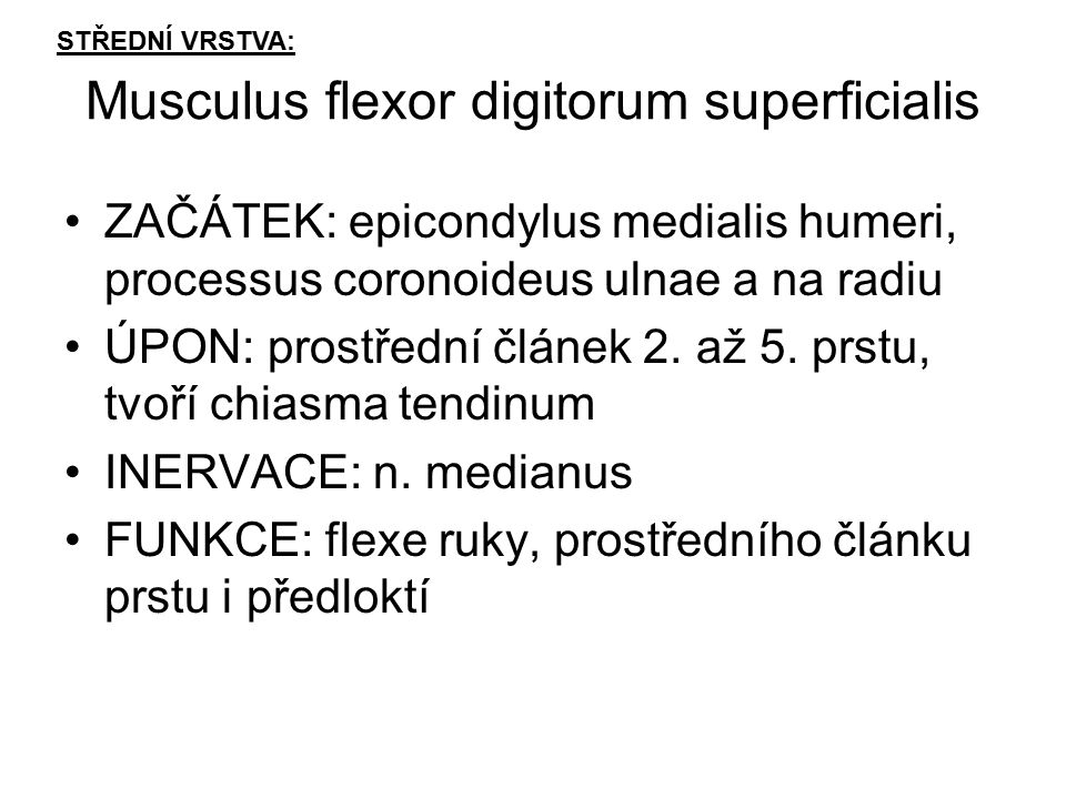 Musculus flexor digitorum superficialis