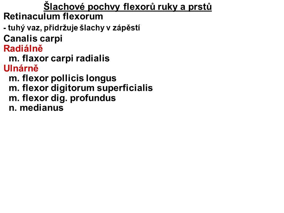 Šlachové pochvy flexorů ruky a prstů