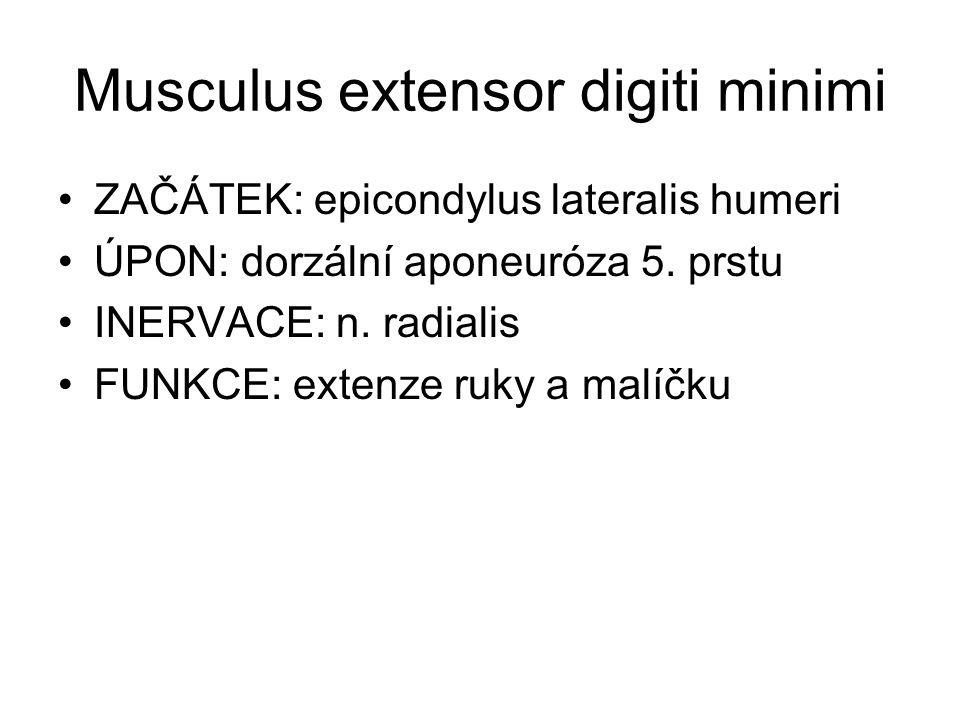 Musculus extensor digiti minimi