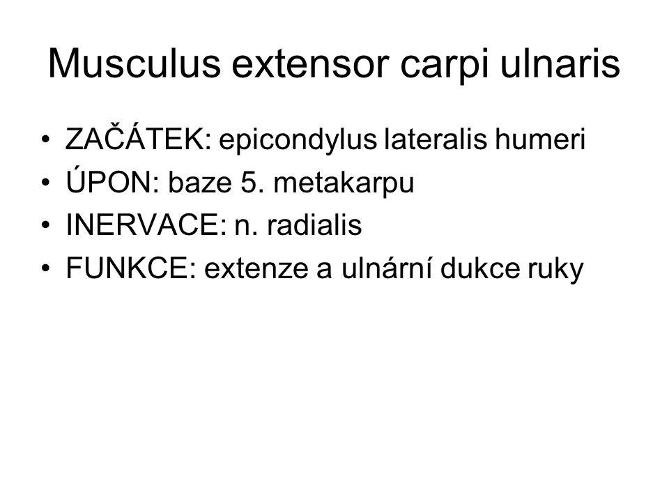 Musculus extensor carpi ulnaris
