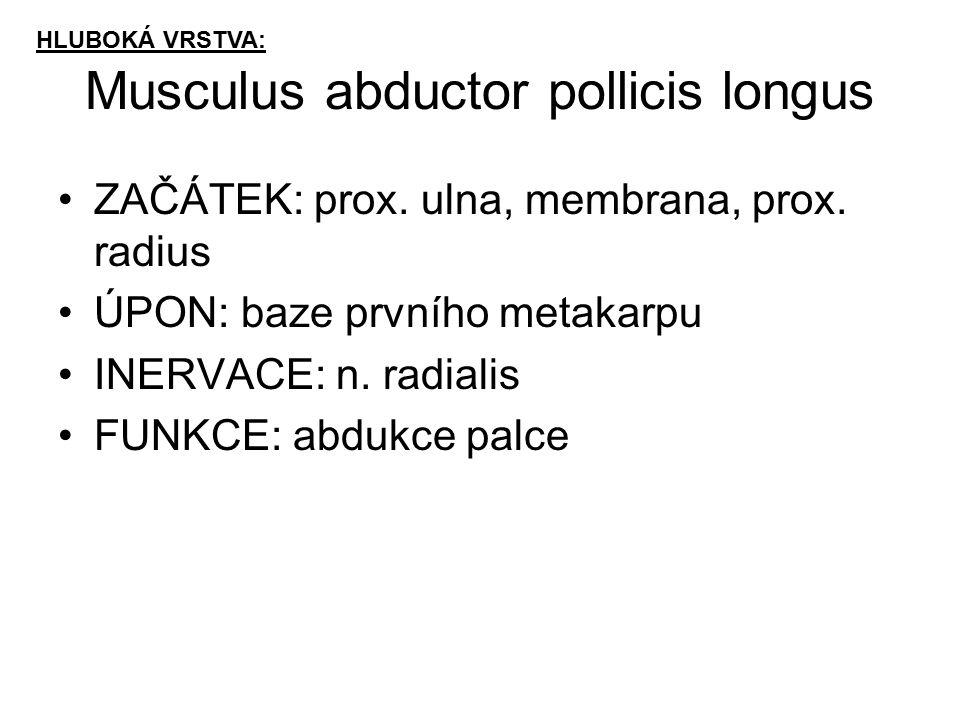 Musculus abductor pollicis longus