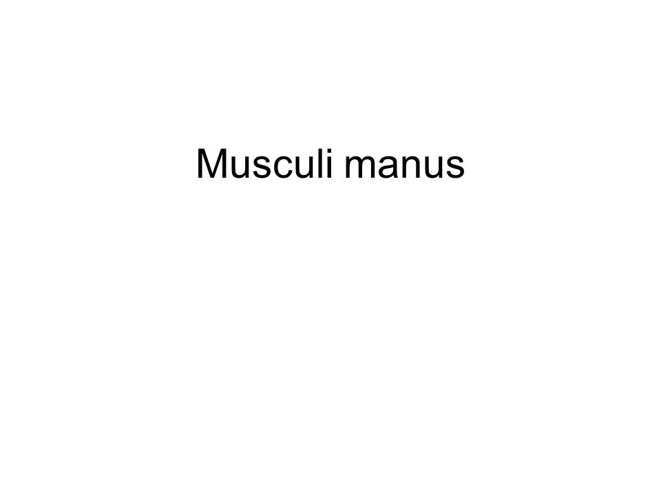 Musculi manus
