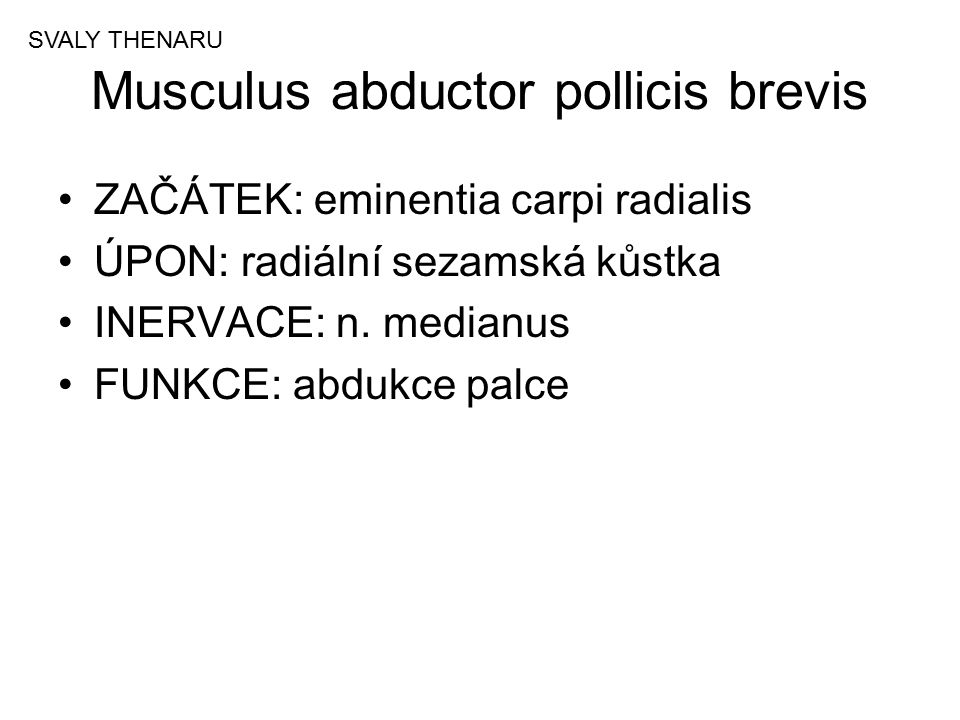Musculus abductor pollicis brevis