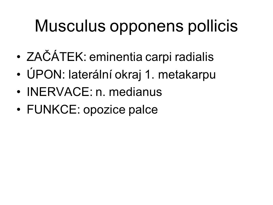 Musculus opponens pollicis