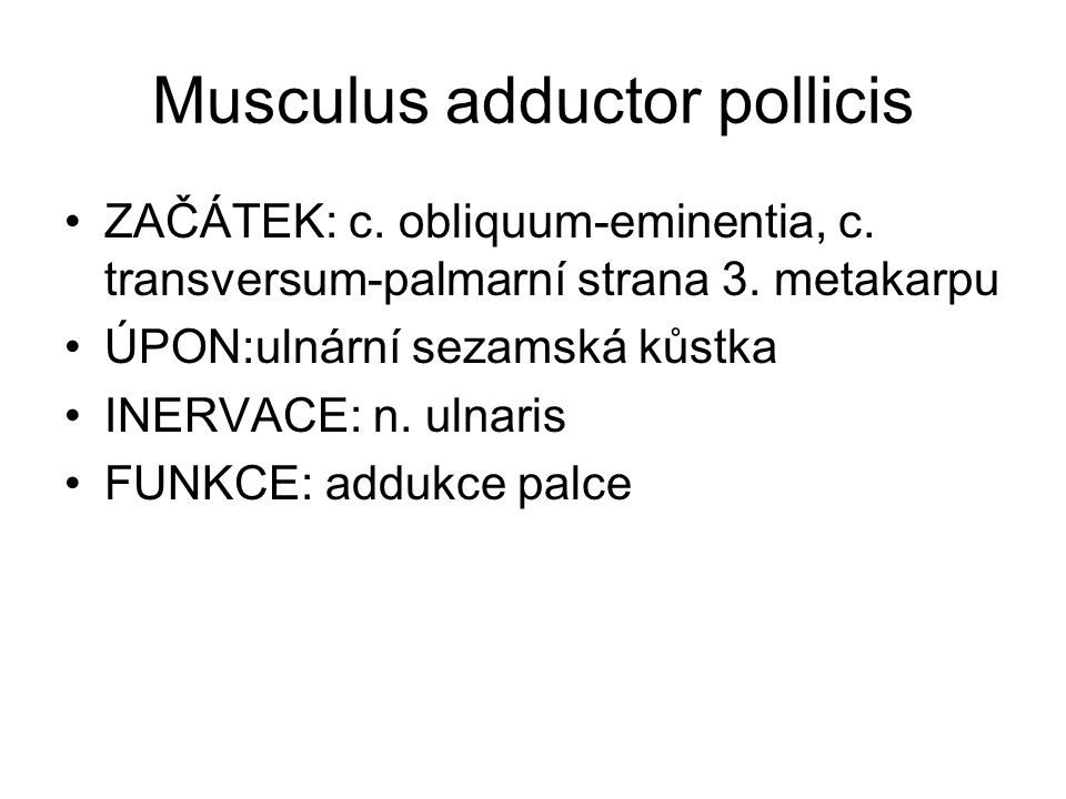 Musculus adductor pollicis