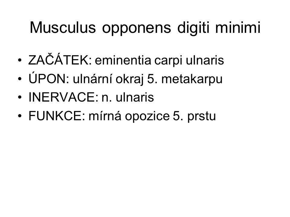 Musculus opponens digiti minimi