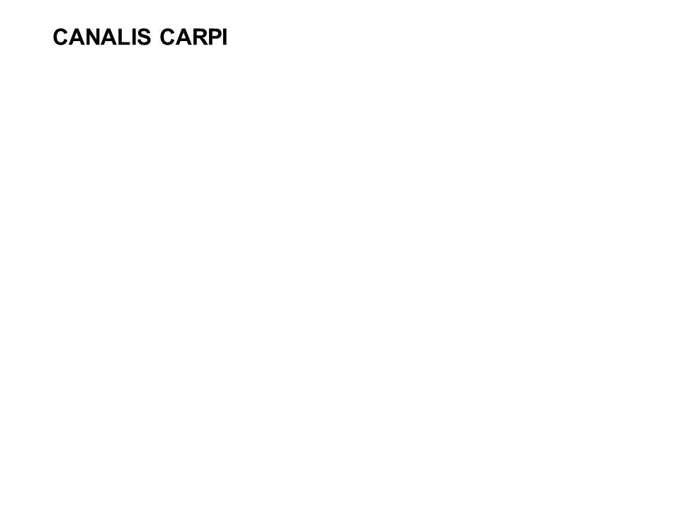 CANALIS CARPI
