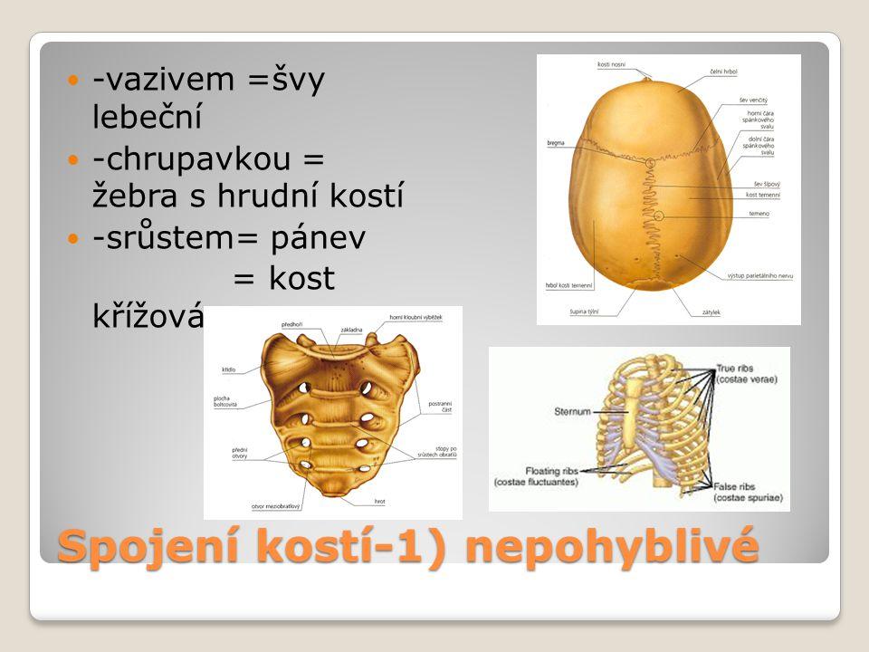 Spojení kostí-1) nepohyblivé