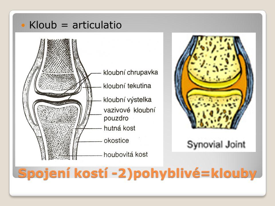 Spojení kostí -2)pohyblivé=klouby